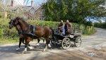 horses-and-cart 2.jpg