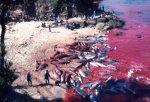 japan-dolphin-cove-slaughter.jpg