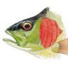 FishGills